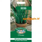 111097 Chives Herb
