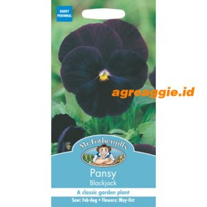 111310 Pansy Blackjack