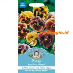 112215 Pansy Frou Frou Mixed