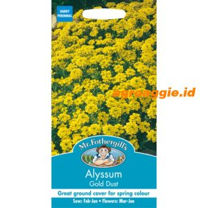 112351 Alyssum gold dust