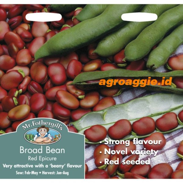 114626 Broad Bean Red Epicure