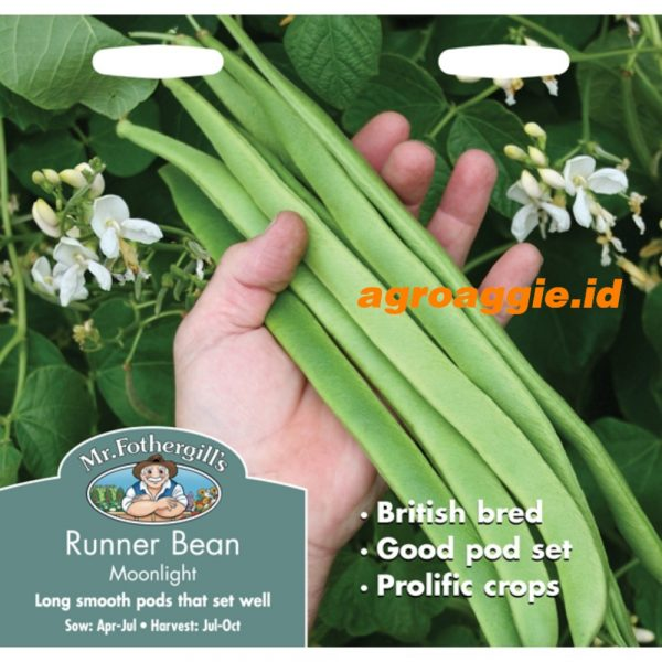 114645 Runner Bean Moonlight