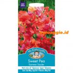 114744 Sweet Pea Summer Sizzler