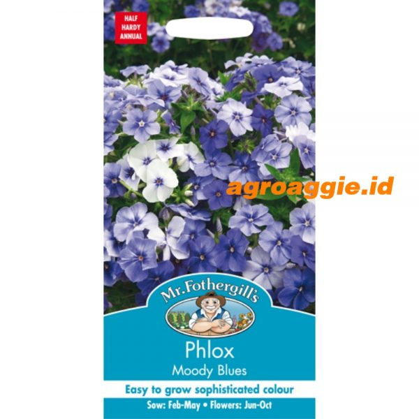114745 Phlox Moody Blues