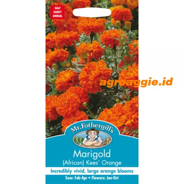 116238 Marigold African Kees Orange