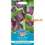 118089 Sweet Pea Almost Black