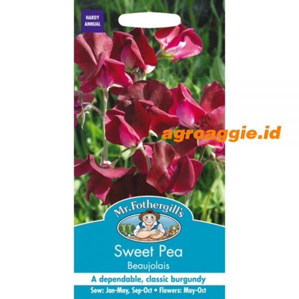 118091 Sweet Pea Beaujolais