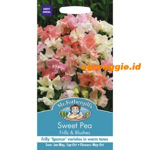 120296 Sweet Pea Frills Blushes