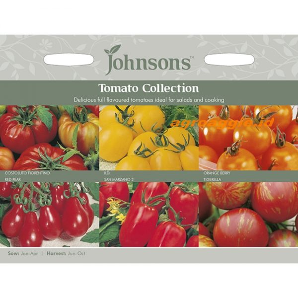 121146 Tomato Collection
