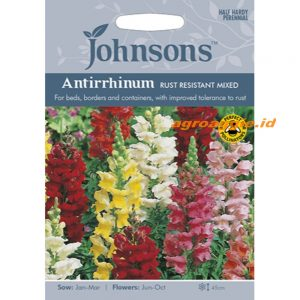 121150 Antirrhinum Rust Resistant Mixed