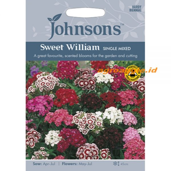 121154 Sweet William Single Mixed