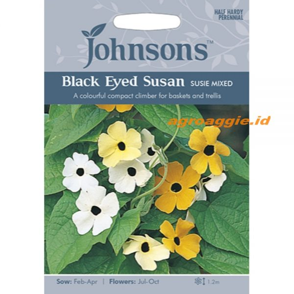 121230 Black Eyed Susan Susie Mixed