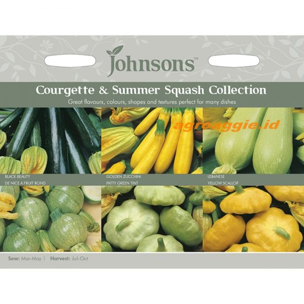 121231 Courgette Summer Squash Collection