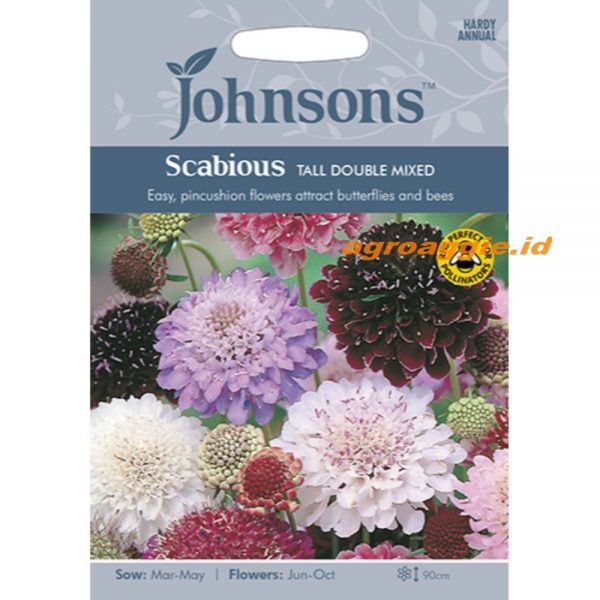121249 Scabious Tall Double Mixed