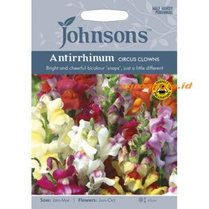 121291 Antirrhinum Circus Clowns