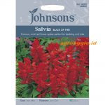 121297 Salvia Blaze of Fire