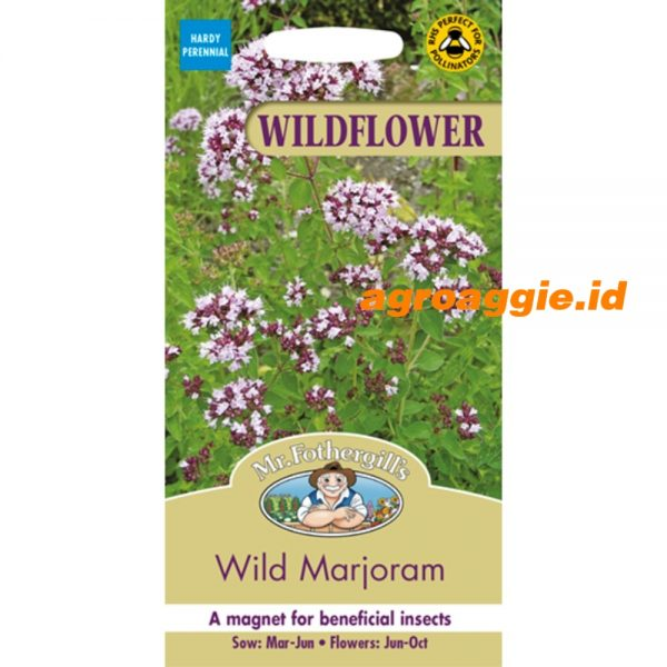 122540 Wild Marjoram Wildflower