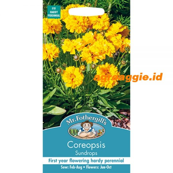 122545 Coreopsis Sundrops