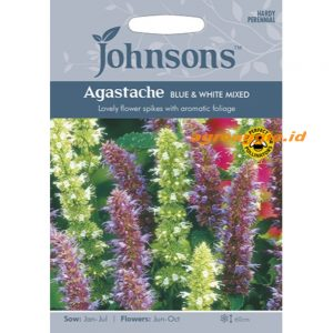 123346 Agastache Blue White Mixed
