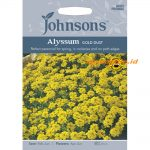 123348 Alyssum Gold Dust