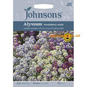 123349 Alyssum Wandering Mixed