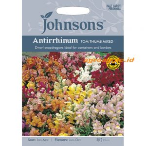 123352 Antirrhinum Tom Thumb Mixed
