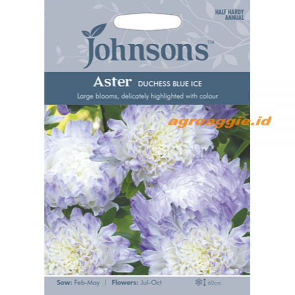 123358 Aster Duchess Blue Ice