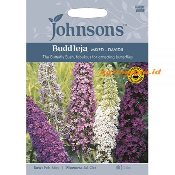 123367 Buddleja Mixed davidii