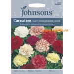 123378 Carnation Giant Chabaud Double Mixed