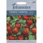 123383 Chinese Lanterns Physalis