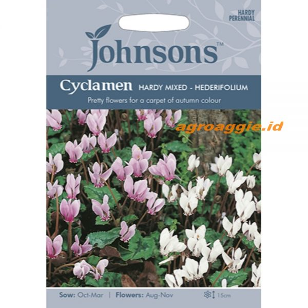 123393 Cyclamen Hardy Mixed hederifolium