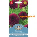123741 Cosmos Double Click Cranberries