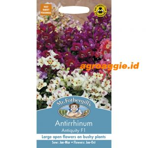 125006 Antirrhinum Antiquity F1