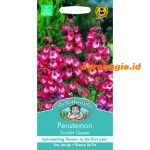 125336 Penstemon Scarlet Queen