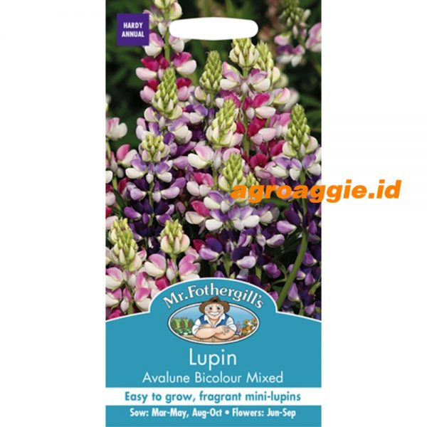 126255 Lupin Avalune Bicolour Mixed