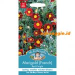126256 Marigold French Red Knight